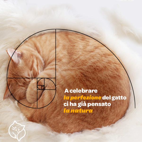17_Creativita_gatto